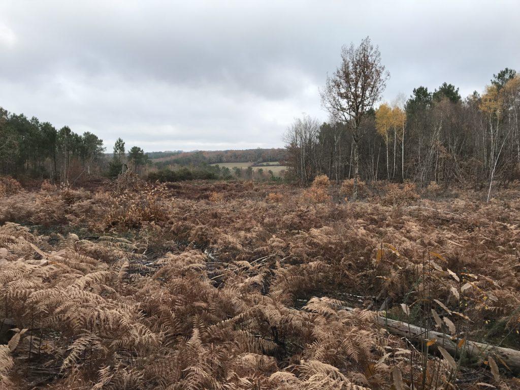 La Douze - Forêt sinistrée en 1999